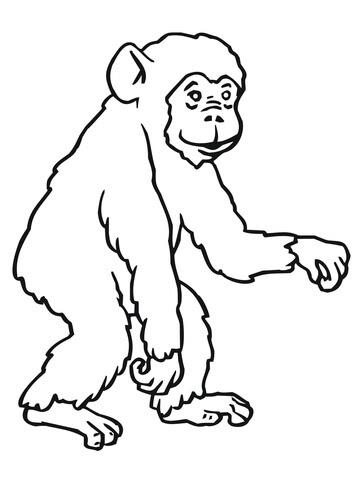 Disegni Scimmie Da Colorare Per Bambini Coloradisegni