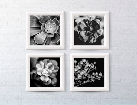 Black and White Plant Set of 10x10 prints by BrickHausPhotography