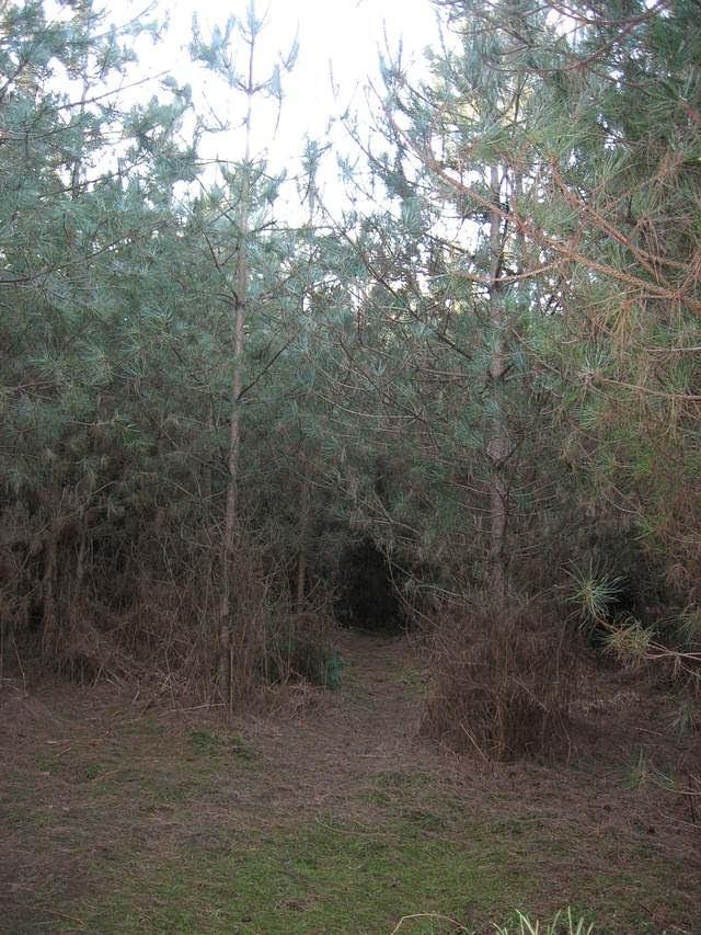 Claro en el bosque de Rendlesham, cerca de la zona de aterrizaje de la nave.