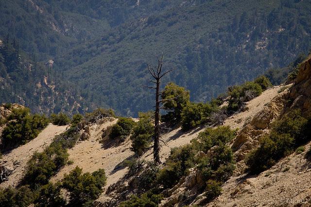 solo trees