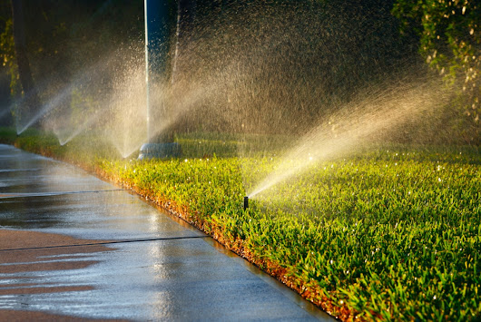 Watering Your Lawn? Wait!