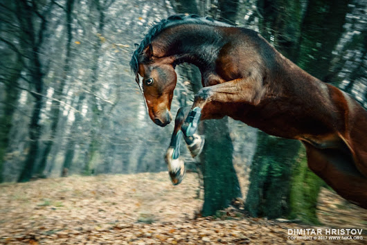 Wild horse jumping