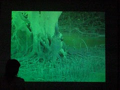 Videoclip of monitor lizards fighting