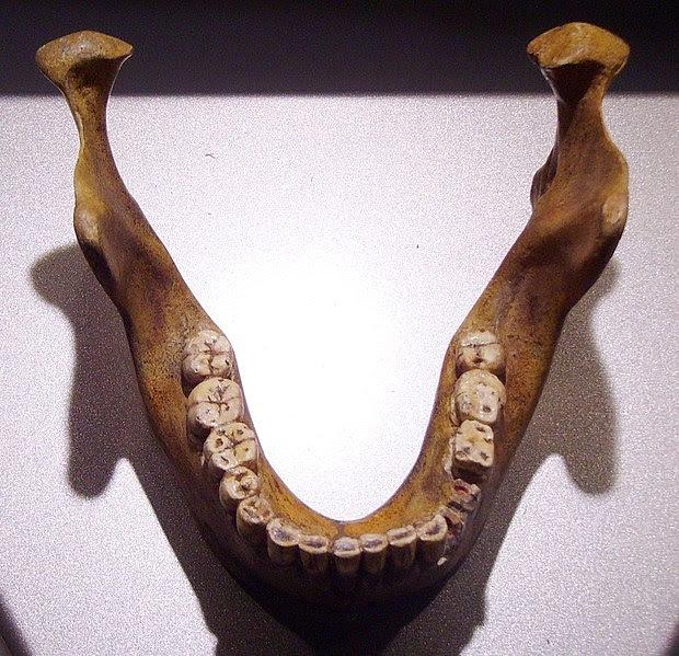 Réplica de la mandíbula de Mauer