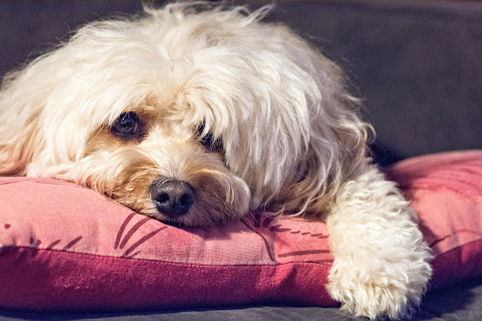 Nearly 3 in 4 Renters Live With 4-Legged Friends