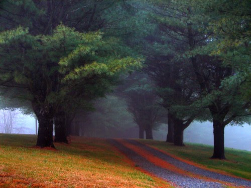 Misty Pine Drive