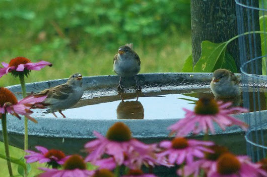Water for Wildlife and Your Dream Landscape | Natural Resources Council of Maine
