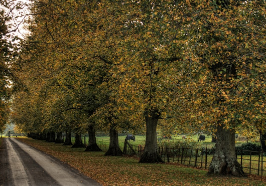 Autumn Tree Lane. drive Avingto - neilhoward | ello