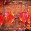 Fall is the Best Time for Home Improvement Projects | Edmonton Parging Contractors | J and J Coatings