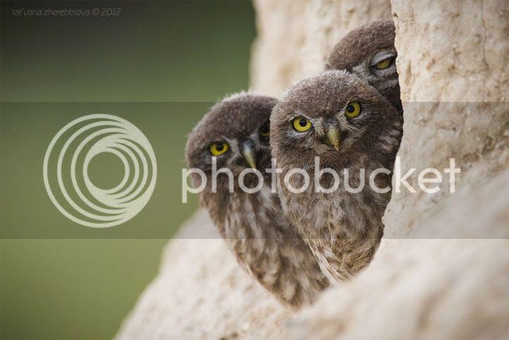photo atiana-Zherebtsova-3_zps04v69wx9.jpg