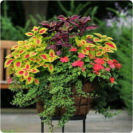 Love potted planters! by marlene