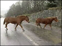 Horses on road