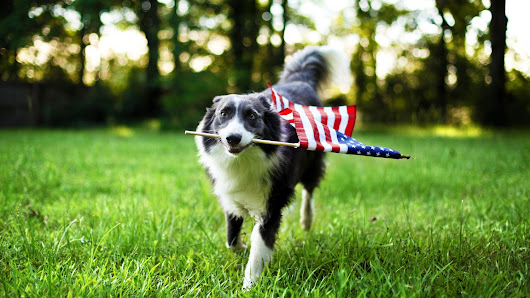 Fourth of July Safety for Our Four-Legged Friends