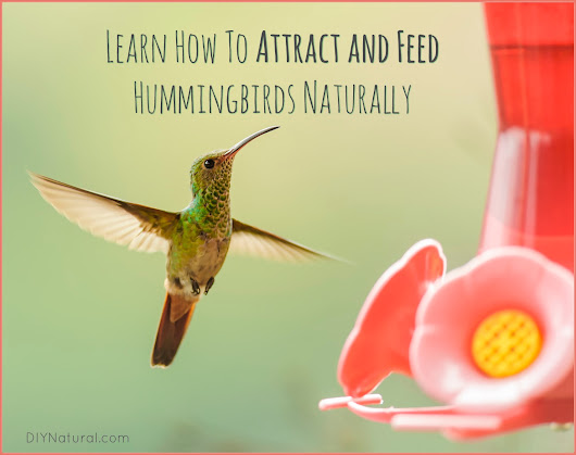 Hummingbird Food Recipe and How To Attract Hummingbirds