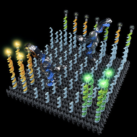 Sorting Molecules with DNA Robots | Caltech