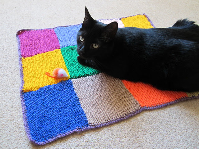 school knitting club cat blankie paws up (1)