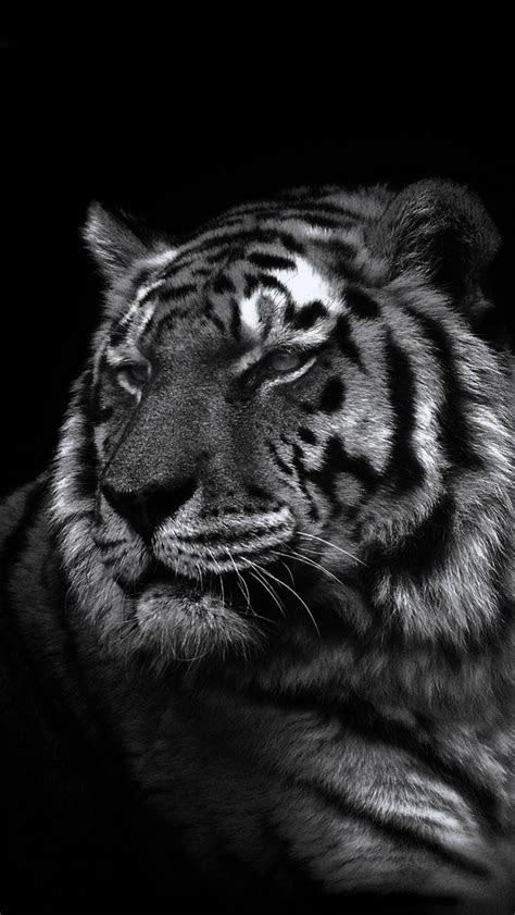 iphone  wallpaper tiger wallpapers pinterest