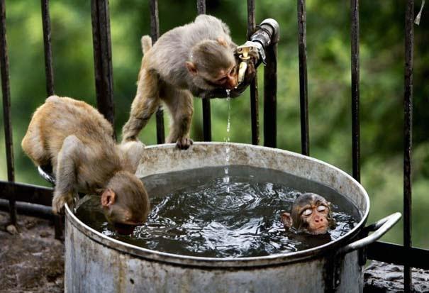 Οι 50 καλύτερες φωτογραφίες ζώων του 2012 (11)