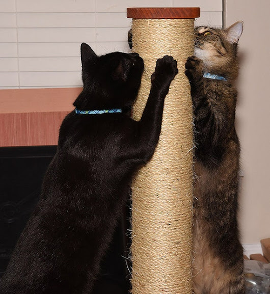 30 inch tall 4 1/2 dia sisal rope cat scratching post