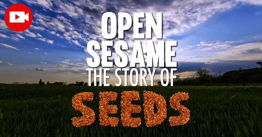 """Open Sesame"" Shows the Importance of Seed Saving"