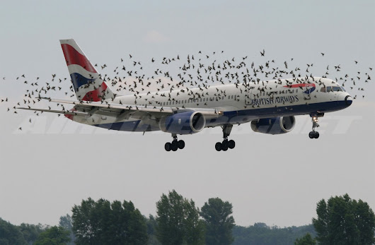 What happens when a bird hits an airplane?