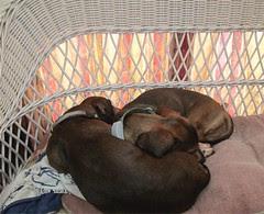Snuggle by Teckelcar
