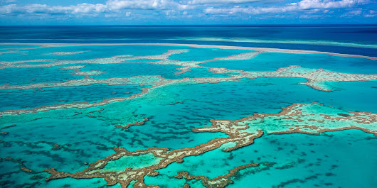 OUTRAGE Over Approval To Dump Sediment On One Of World's Most Fragile Ecosystems