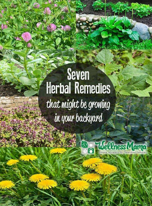 5 Backyard Herbal Remedies To Harvest | Wellness Mama