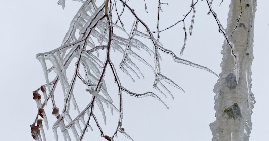 Snow and ice can damage trees, shrubs