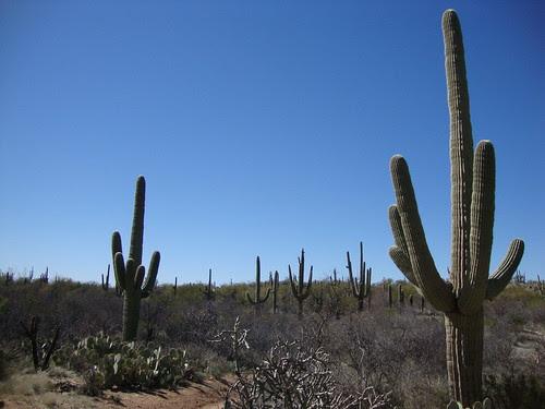 Saguaro National Park East, Loma Verde Loop