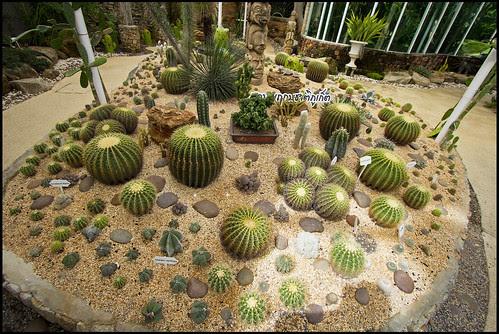 Cactus Garden at Phuket Botanic Garden