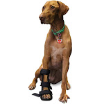 Walkin' Pets Front Leg Dog Splint with Foam Insert for a Custom Fit XLarge