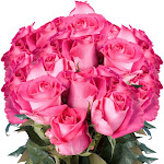 75 Creamy Pink Sweet Unique Roses Long Cream Pink Roses by GlobalRose