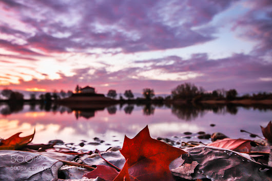 Red Leaves by the Lake