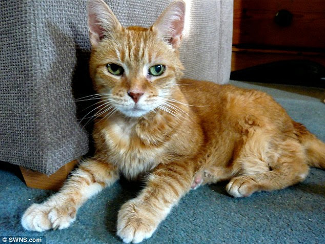 Natasha, the ginger tabby, has a rare condition which means she has oversized paws and six extra toes