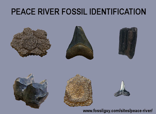 Peace River Fossil Identification