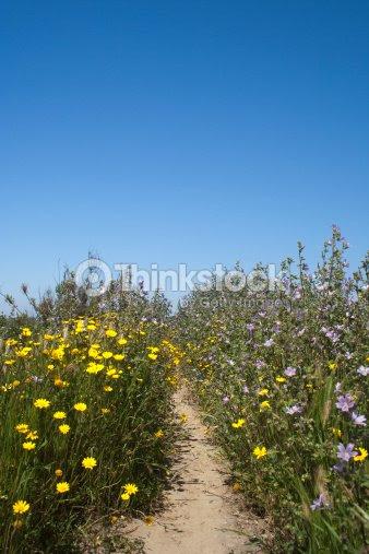 Flores Silvestres Em Qinta Do Lago Algarve Portugal Foto De Stock