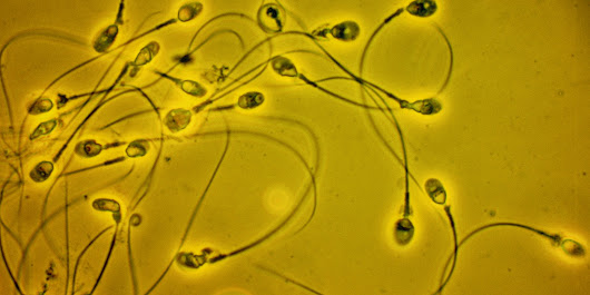 Male Infertility Gene Discovered by Chinese Scientists
