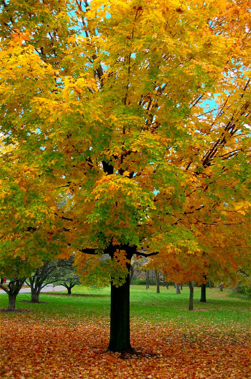 Soul Amp: Fall Tree And Leaf Photos From Milwaukee, WI