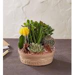 Cactus Dish Garden Small