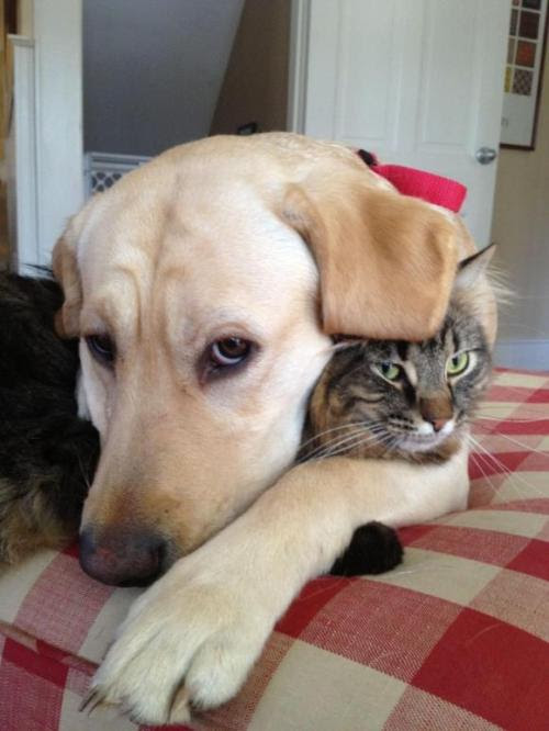 funnywildlife:    funnywildlife:  Don't you just wanna be a cat!!