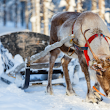 Reindeer and Why They Are Associated With Christmas - Crafty Puzzles Blog