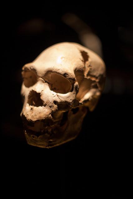 Cráneo de Miguelón