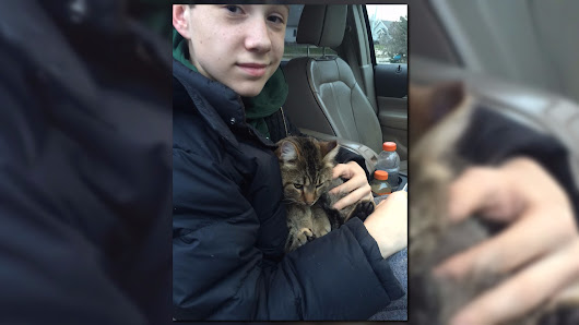 This is a story about a cat named Lucky: Boy rescues cat from highway | WZZM13.com
