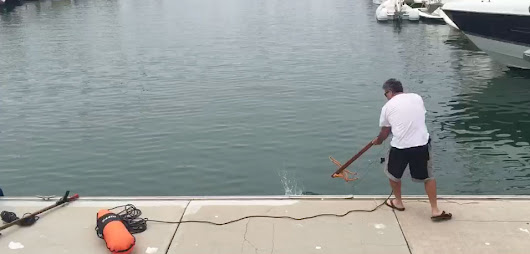 Video: Tuna speared from dock in harbor | SDFish.com