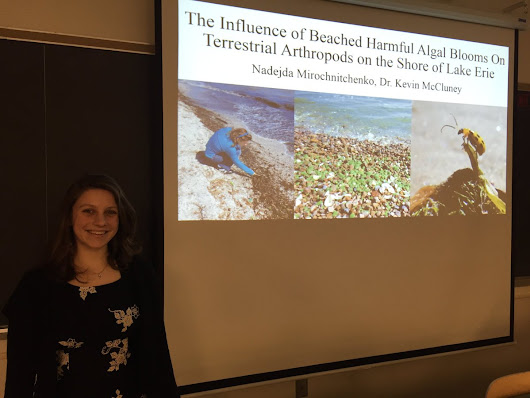 "Kevin McCluney on Twitter: ""Proud of my student @biophile21 for a great honors thesis talk today! HABs appear to benefit shore arthropods! """