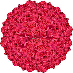200 Hot Pink Roses Hot Princess Roses Wholesale by GlobalRose