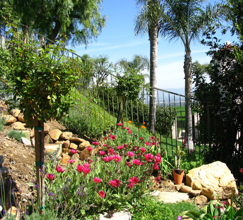 Garden Makeover: Discover a View From Your Yard!