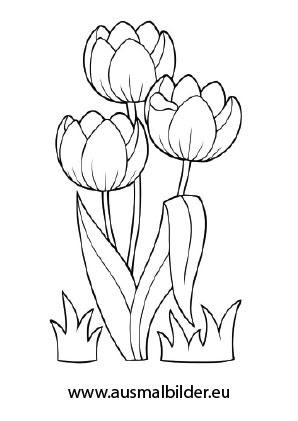 Ausmalbilder Tulpen Ausdrucken Ausmalbilder
