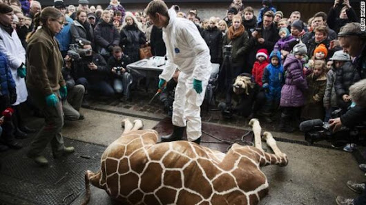 Twitter / cnnbrk: Zoo kills healthy giraffe, ...